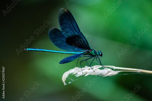 libélula turquesa Canvas Print