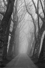 Two People At The End Of A Foggy Alley
