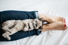 Overhead View Of Kitten Lying ...