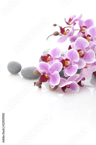 Fototapety, obrazy: Orchid and stones close up.