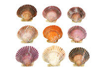 Colorful Shells Isolated On Th...