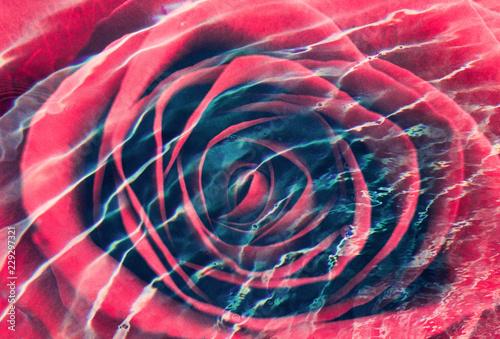 Marzycielski zakończenie róży podwojony wystawiający z wodą
