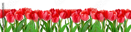 Fotobehang Tulp Red tulips on white background