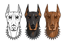 Doberman Pinscher, American Do...