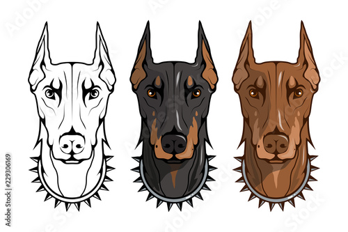 Fotografia doberman pinscher, american doberman, pet logo, dog doberman, colored pets for d