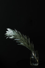 Pale Green Plant In Vase With Black Background