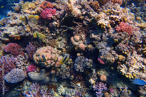 Spoed Foto op Canvas Koraalriffen coral reef in Egypt
