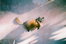 Fluffy Brown Cat On Concrete Floor