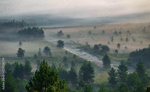 Obraz na plátne Misty sunrise in the country with firebreak