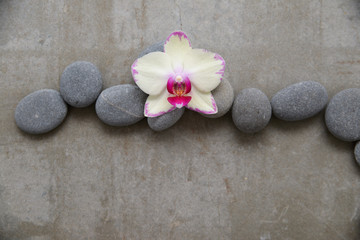 Fototapeta na wymiar pile of gray stones and white orchid on gray background