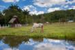 Caballo pastando en Valle de Viñales Cuba