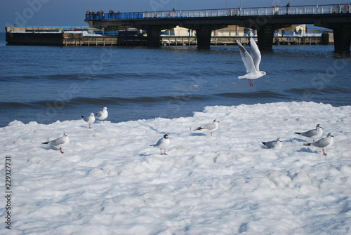 Fototapeta Kołobrzeg zimą obraz