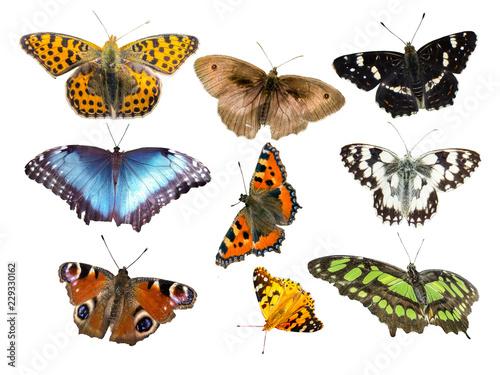 Viele Schmetterlingsarten isoliert