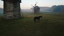 Beautiful Blackhorse On Field ...