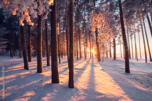 Obraz Winter wonderland - fototapety do salonu