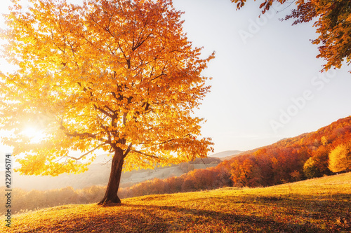 Spoed Fotobehang Meloen Awesome image of the autumn beech tree.