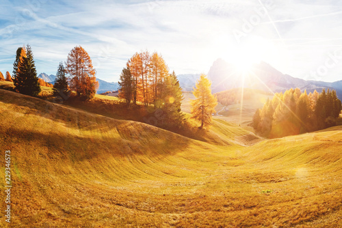 Fototapeta Magical image of larch on the slopes of the hills. Location place Seiser Alm or Alpe di Siusi, South Tyrol, Italy. Europe.