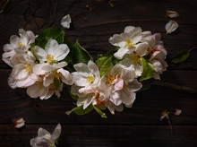 Pale Pink Blossoms On Wooden Board