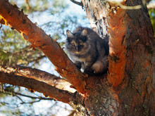 Cat High Up In A Tree. Portrai...