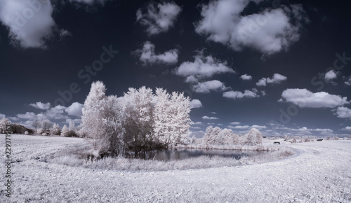 Cadres-photo bureau Bleu vert infrared photography - ir photo of landscape with tree under sky with clouds - the art of our world and plants in the infrared camera spectrum