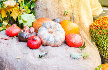 Still Life With Pumpkins And A...
