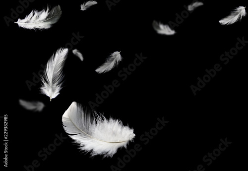 Foto  white feathers flying in darkness. black background.