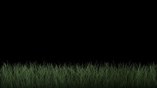 Grass Growing Animation. Animation Of Blades Of Grass Growing From The Bottom On Black. Isolate With Luma Matte