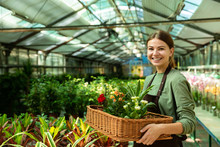 Image Of Cheerful Woman Gardener 20s Wearing Apron Carrying Basket With Plants, While Working In Greenhouse