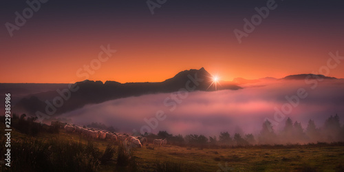 Photo flock of sheep in Saibi mountain at the sunrise