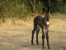 Little Donkey Looking At The C...