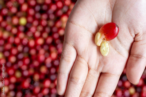 Photographie red cherry coffee bean in hands