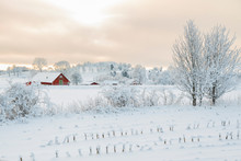 Rural Winter Landscape With A ...
