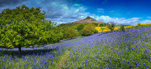 Bluebells Under Roseberry Topp...