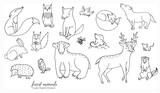 Fototapeta Fototapety na ścianę do pokoju dziecięcego - Hand drawn line art cartoon doodle animal set in vector. Forest animal illustrations isolated on the white background