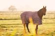 Pferd im Gegenlicht
