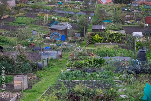 Photo Allotment garden in an urban landscape