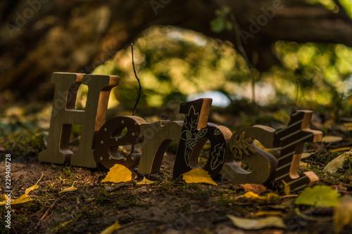 Herbstschriftzug im Wald