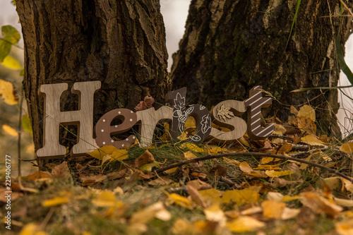 Herbstschriftzug am Baum