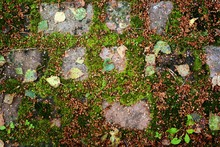 A Tightly Laid Stone Granite Pavers With Green Grass Between The Tiles. Magnificent Sun Glare On A Bright Blue Stone Pavement In The Old Town With Red Autumn Leaves. The Beginning Of Warm Autumn.