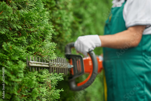 Tablou Canvas Close up of man hand with hedge trimmer cutting bushes.