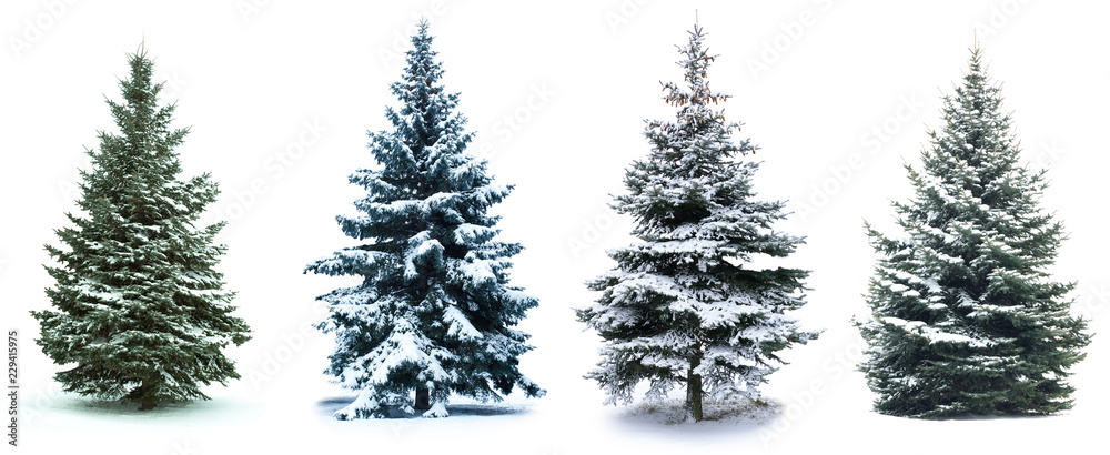 Fototapety, obrazy: Christmas Tree collage