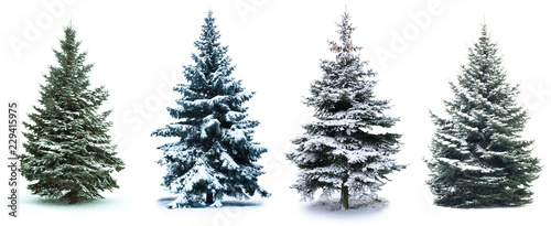 Vászonkép  Christmas Tree collage
