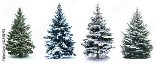 Fototapeta Christmas Tree collage obraz