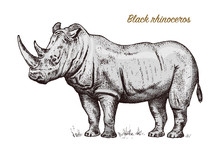 African Rhinoceros Wild Animal...