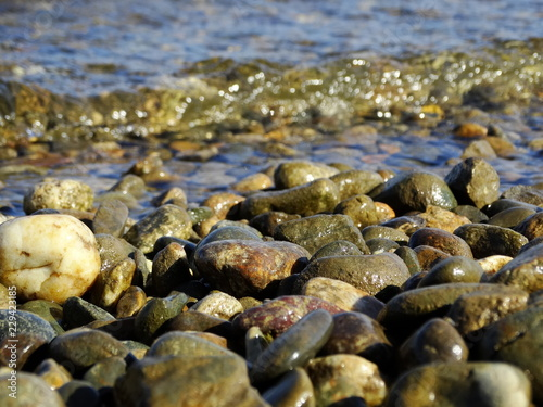Aluminium Prints Forest river Pebbles on the river Bank