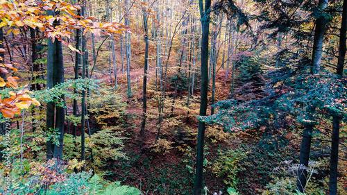 Obraz Jesień w lesie - fototapety do salonu