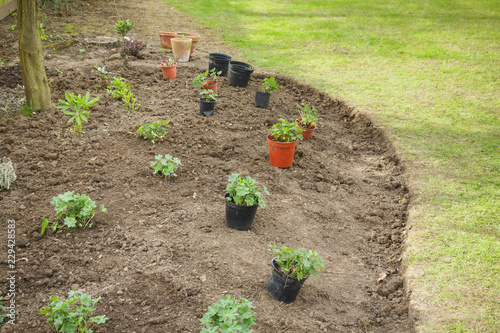 Planning a flower bed