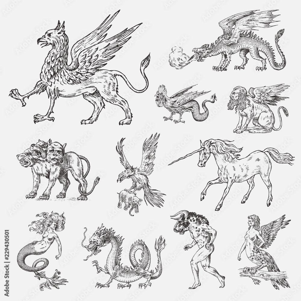 Fototapeta Set of Mythological animals. Mermaid Minotaur Unicorn Chinese dragon Cerberus Harpy Sphinx Griffin Mythical Basilisk Roc Woman Bird. Greek creatures. Engraved hand drawn antique old vintage sketch.