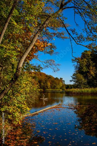Photo  Herbststimmung am Hellsee bei Lanke im Brandenburgischen Naturschutzgebiet Biesenthaler Becken