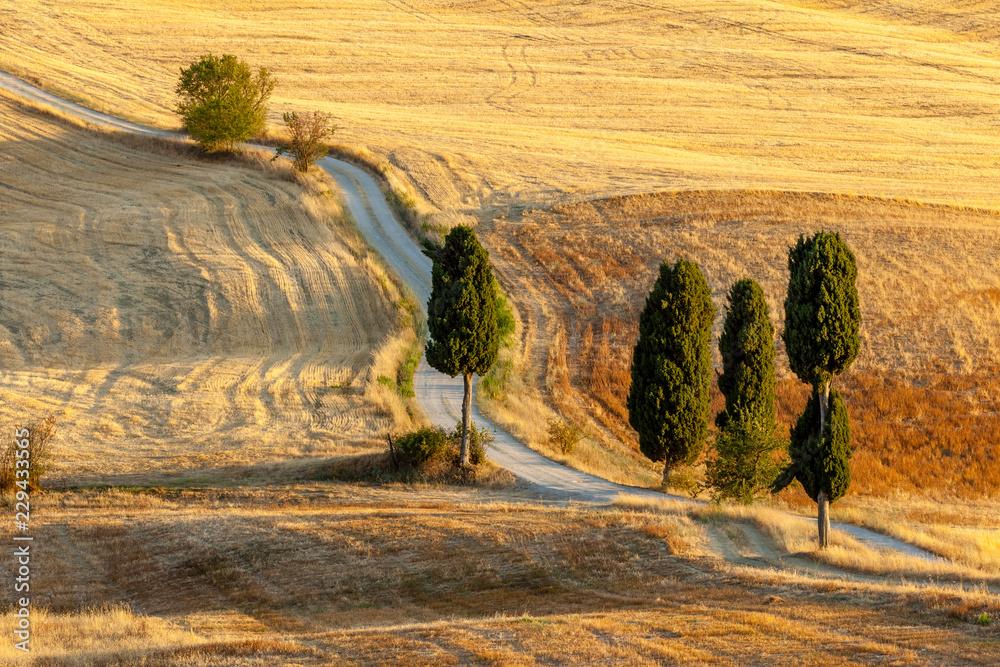 Fototapety, obrazy: Toskańska wieś w lecie, w pobliżu Pienza, Toskania, Włochy